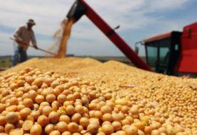 El precio internacional de la soja continúa en alza y llega a los 603 dólares por tonelada