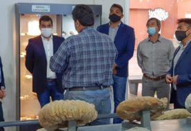 Más de 700 personas ya visitaron el Museo Olsacher de Zapala