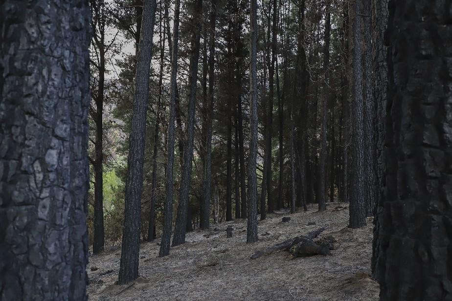 Departamento Bariloche: declaran estado de Emergencia y Desastre Agropecuario y Forestal