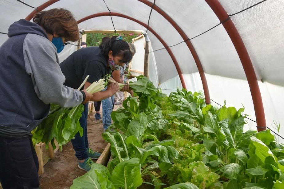 Invernaderos: más de 150 familias de Río Negro acceden a capacitaciones para producir sus alimentos