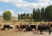El programa GIRSAR fortalece el sistema agroindustrial de la provincia