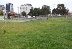 La Municipalidad de Neuquén comienza un nuevo plan forestal