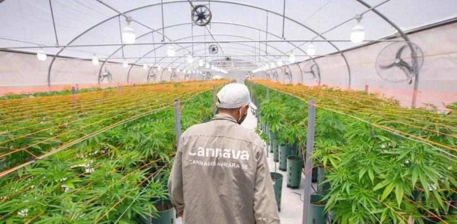 Proyecto de ley – El Gobierno busca crear 10.000 empleos con la legalización de la industria del cannabis