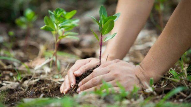 El presidente Alberto Fernández presentará mañana en Olivos la Ley de Educación Ambiental Integral: en qué consiste