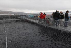 Se consolida la producción de truchas en Río Negro y salieron las primeras exportaciones