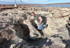 Científicos argentinos hallan restos de un dinosaurio gigante en Neuquén