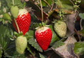 Productores de frutas finas iniciaron un programa para trabajar de forma asociativa